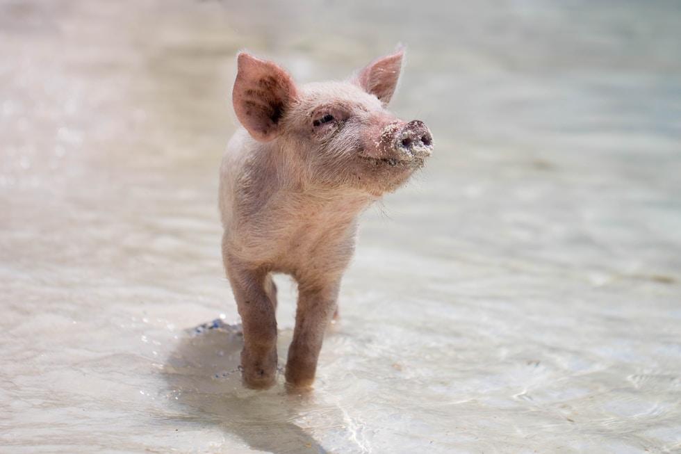 """Der VegTech-Index: Mit pflanzlichen Produkten """"Schwein"""" an der Börse haben"""